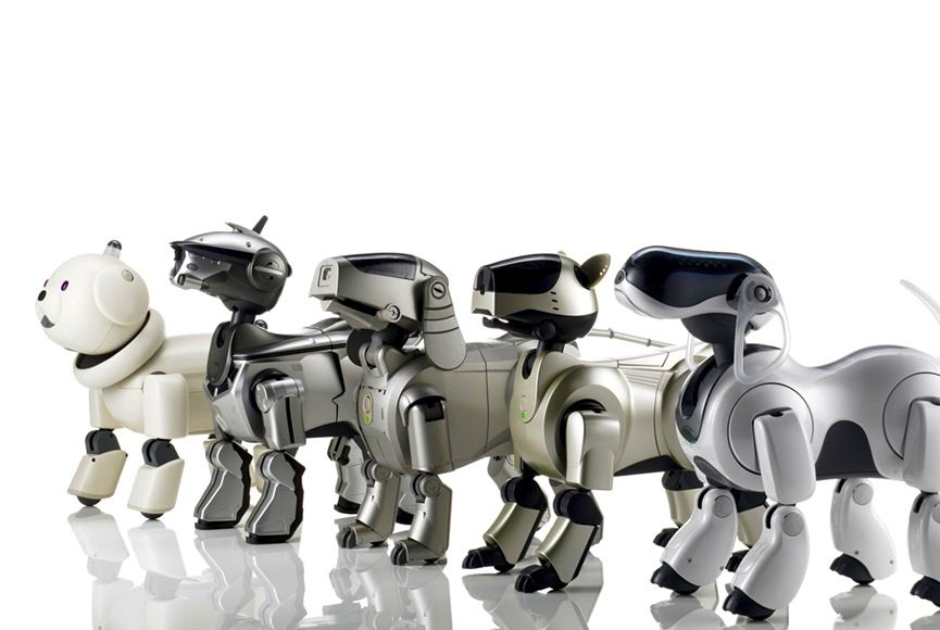 Robotic dogs lined up