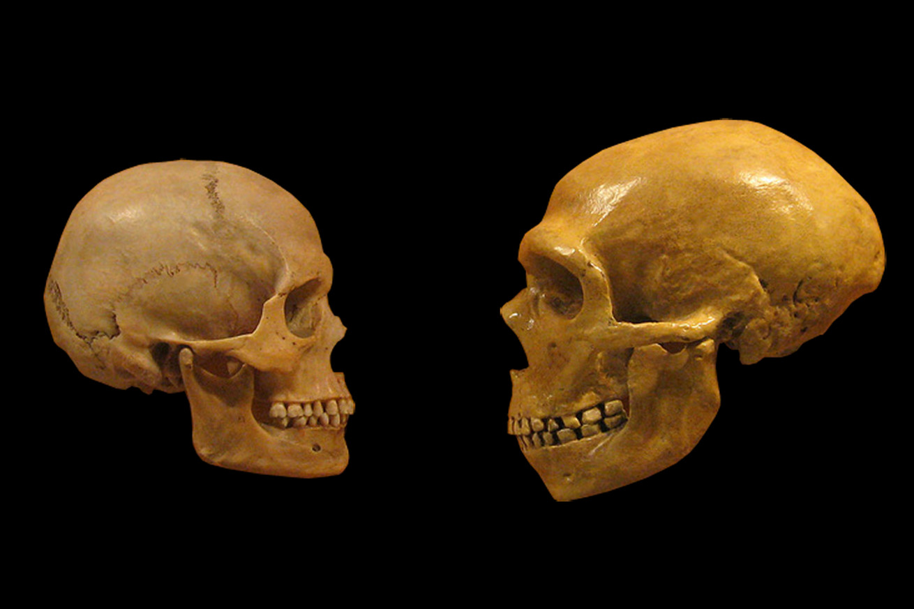 sex disease and extinction what ancient dna tells us about humans and neanderthals