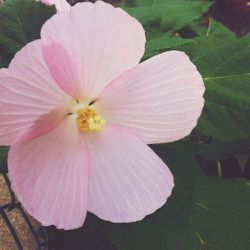 I saw this flower on the way to work today. How is this even possible? It's so beautiful!