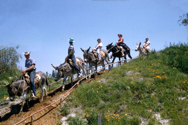 Disneyland mules