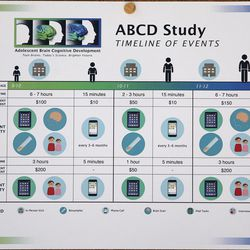 A flyer displaying the ABCD Study's need of 9- and 10-year-old subjects to take part in a 10-year study of adolescent brain cognitive development hangs in Erin McGlade's office at the Diagnostic Neuroimaging Lab in Salt Lake City on Monday, Sept. 19, 2016.