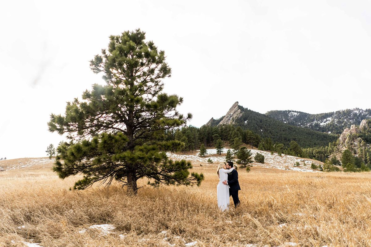 A bride and groom stand in a field beside a pine tree.