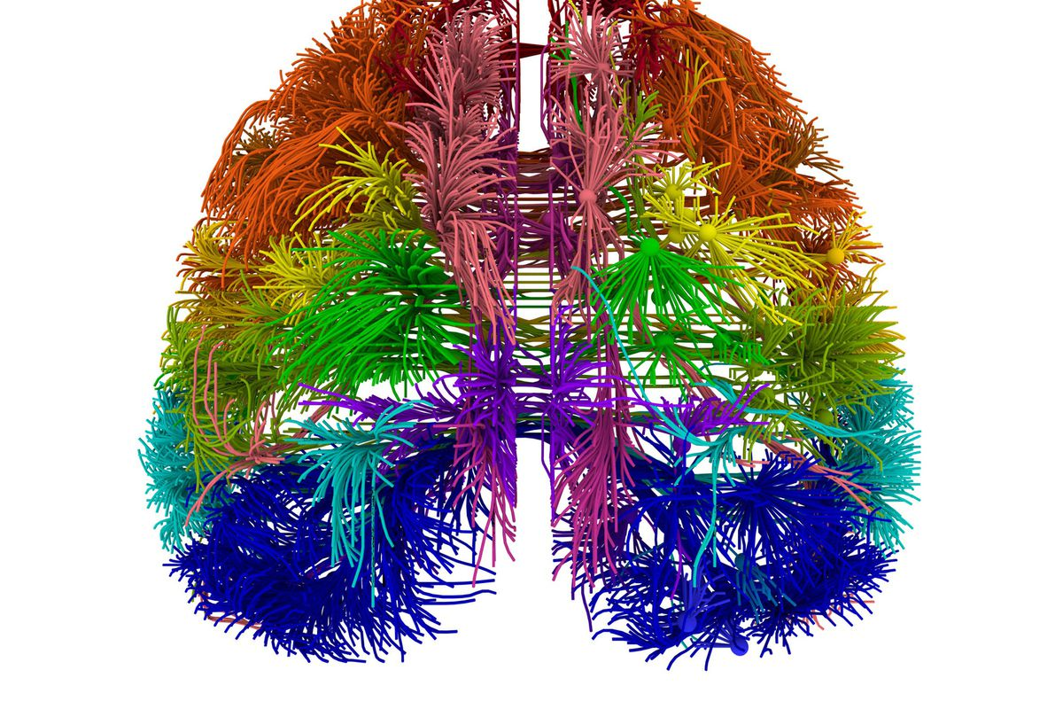 Why Are Scientists Trying To Map Every Single Neuron In The Brain Vox