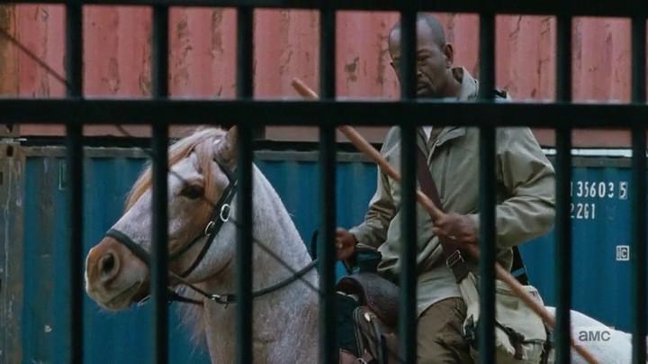 Morgan on a horse.