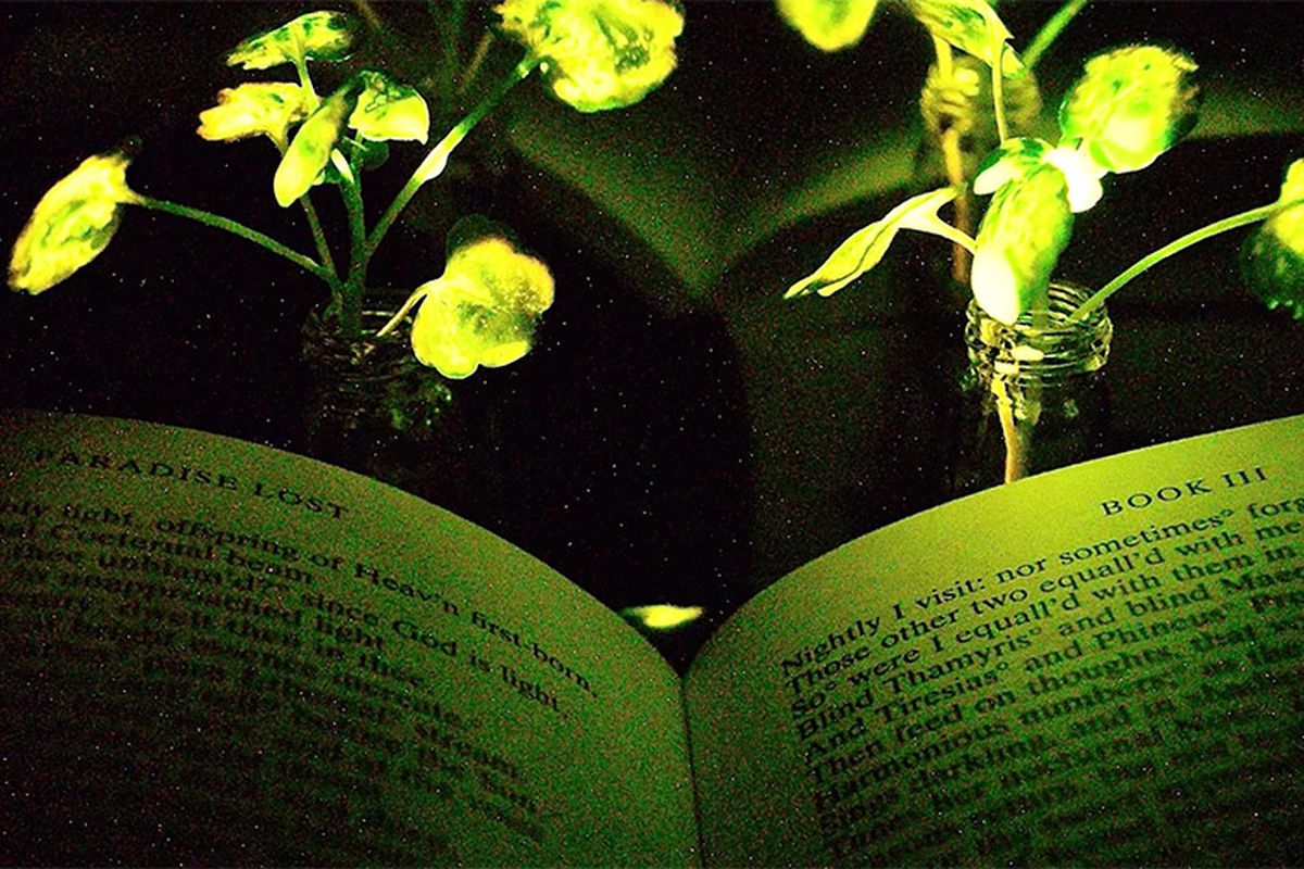 MIT engineers just unveiled living, glowing plants
