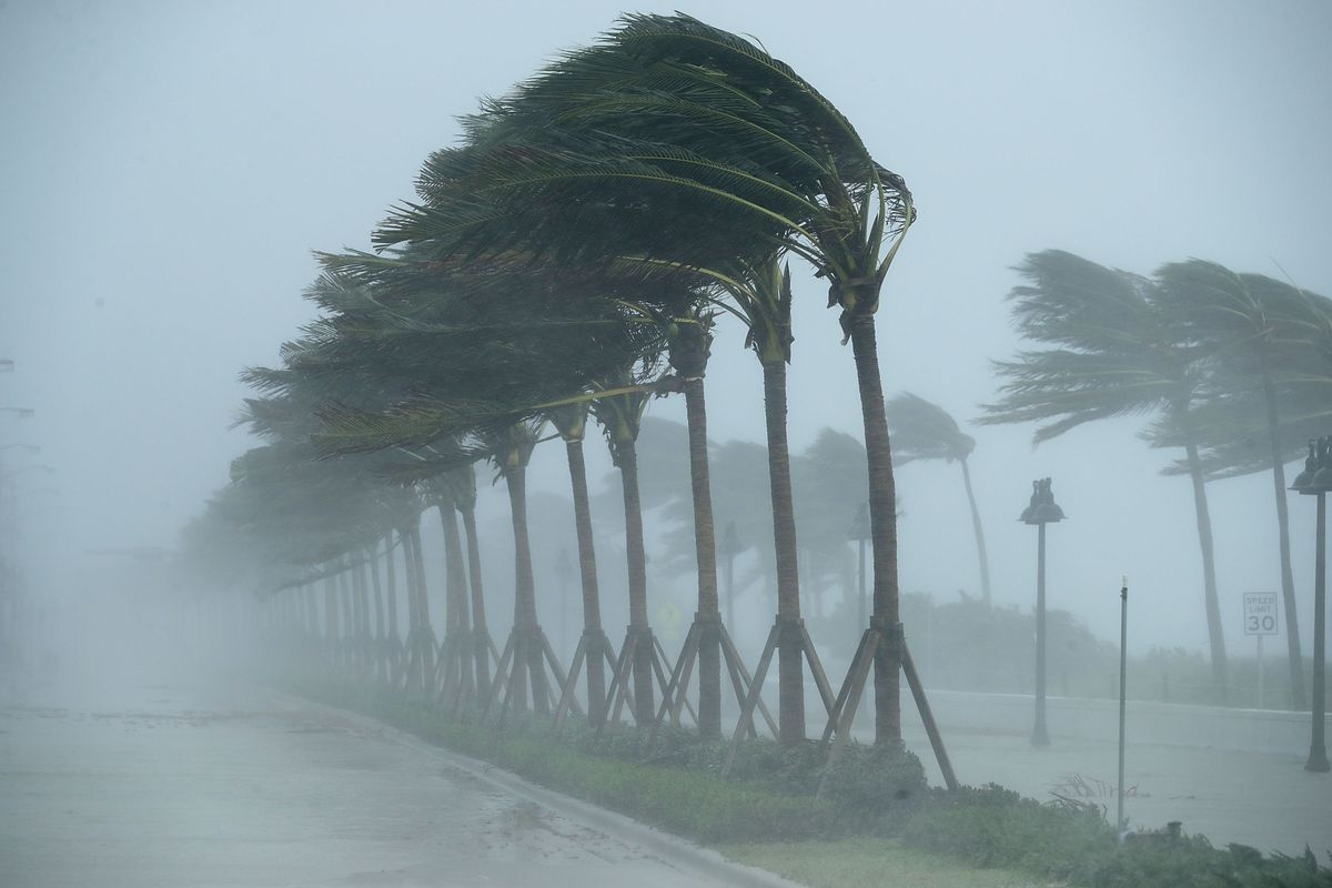 Trees buffeted by the tropical storm wind along North Fort Lauderdale Beach Boulevard as Hurricane Irma hits the southern part of the state
