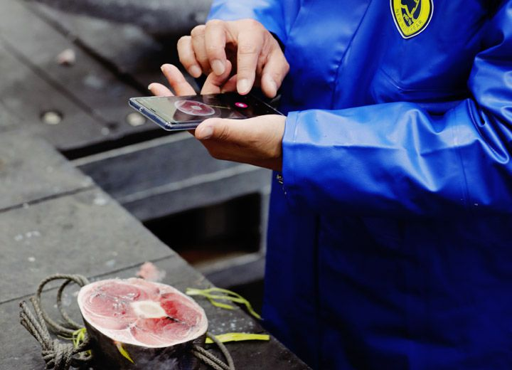 Japanese app Tuna Scope uses AI to grade the quality of fish - The ...