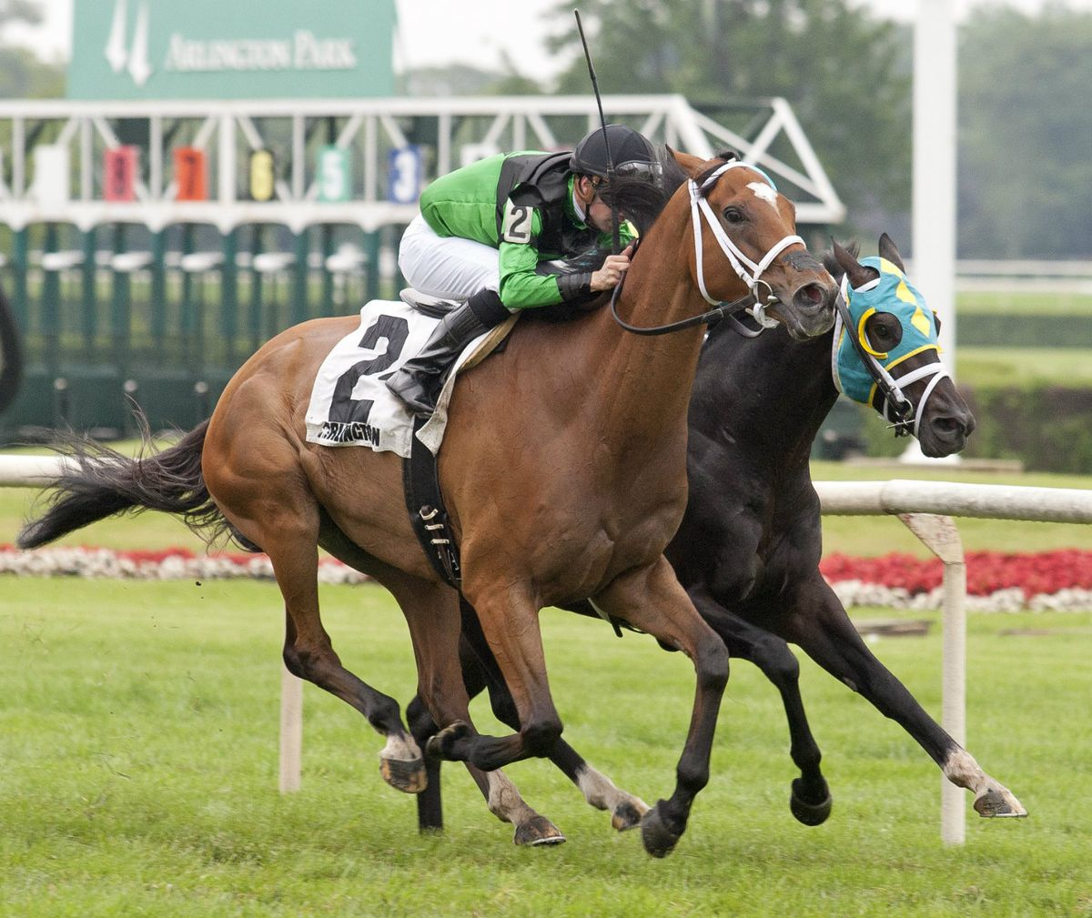 The Pizza Man (2), with Florent Geroux in the irons, from his winning effort in the Stars and Stripes on July 11, 2015, at Arlington Park. | Four Footed Fotos