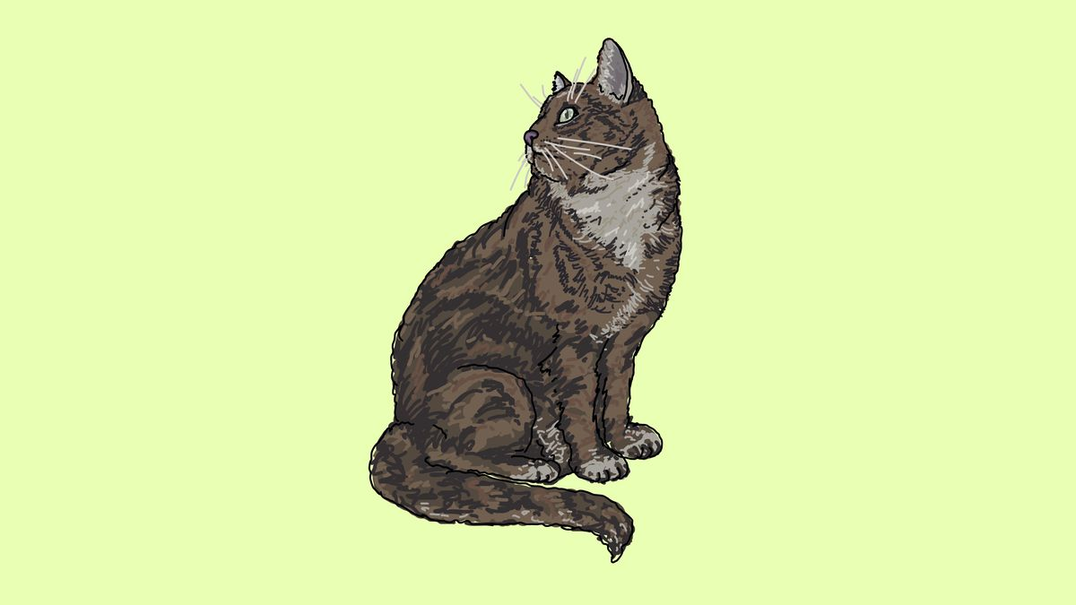 An illustration of a tabby cat sitting and looking over its shoulder.