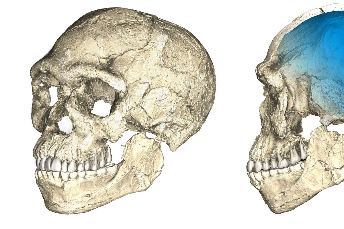 The Story Of Human Evolution In Africa Is Undergoing A Major Rewrite