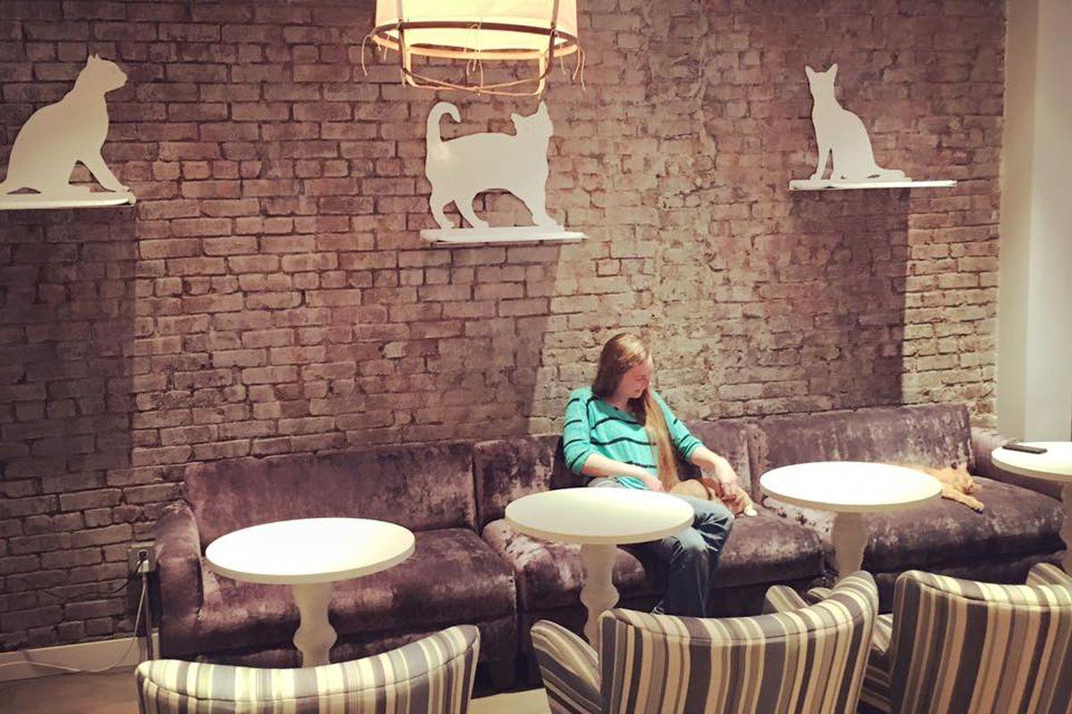 [Cat sanctuary at Little Lions designed by Jeffrey White]