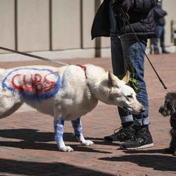 People walk their dogs outside Wrigley Field before the Chicago Cubs Opening Day game against the Pittsburgh Pirates.
