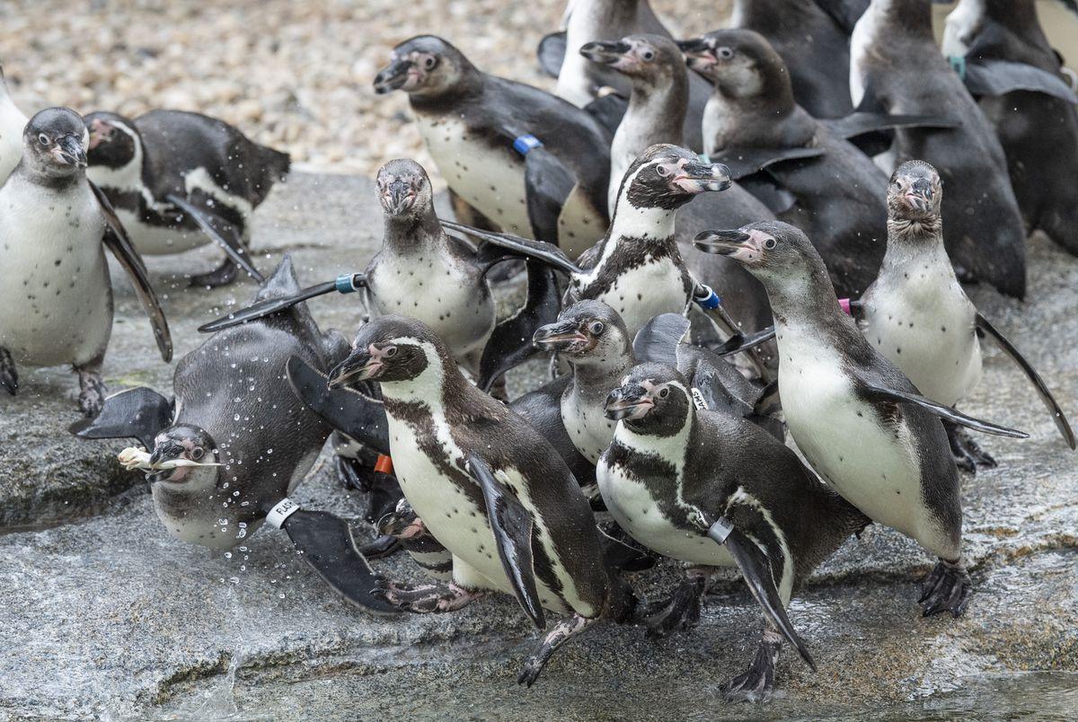 New Penguin Facility at Frankfurt Zoo