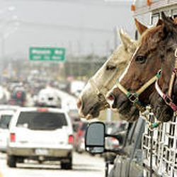 Horses peer out of a trailer on their way to safety as traffic creeps west out of Houston. At least 2.8 million people have fled the hurricane.