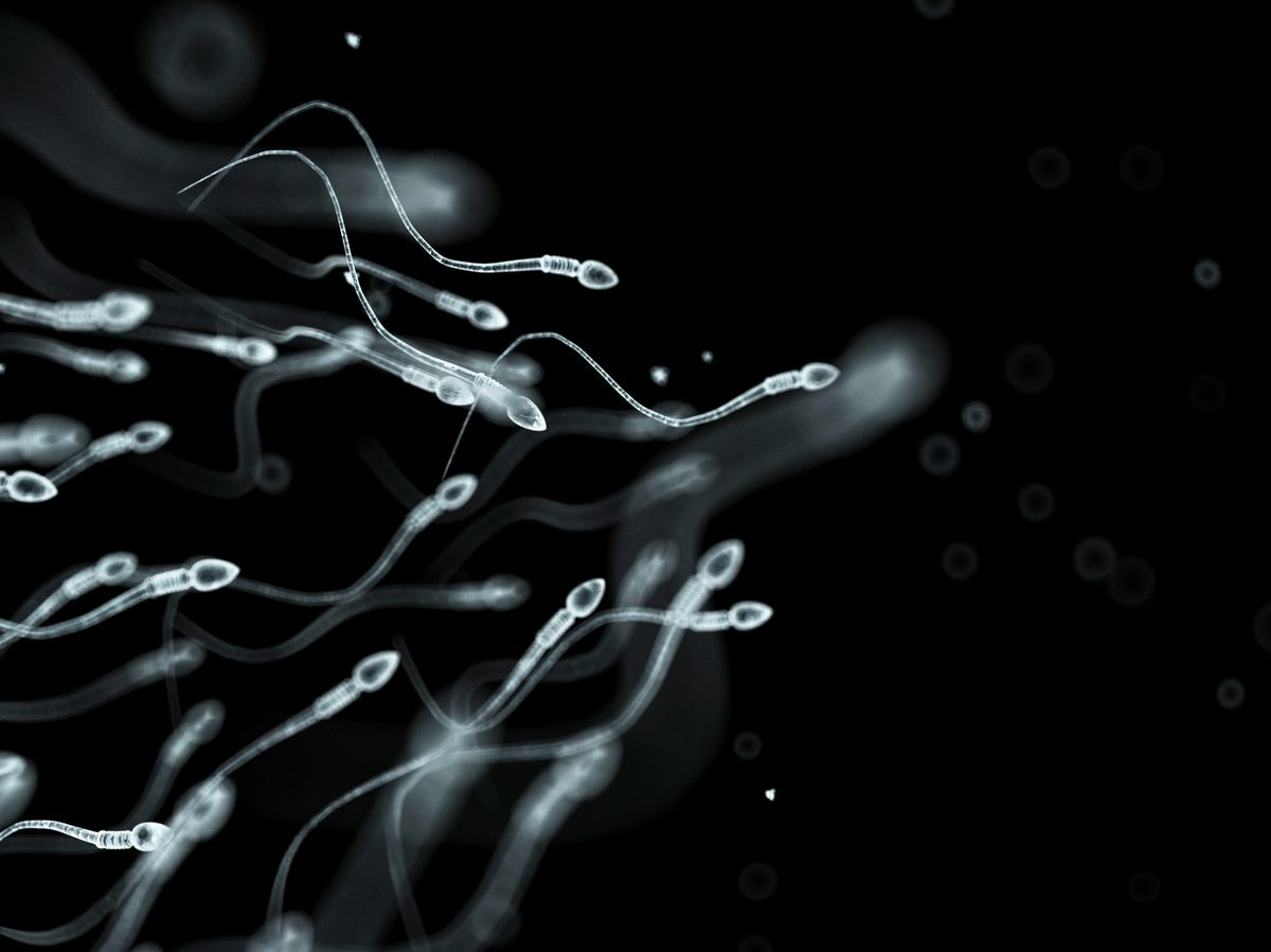 Lower sperm counts don't mean the reproductive apocalypse