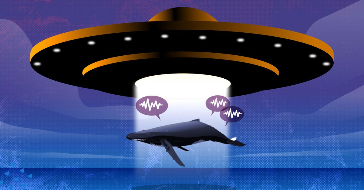 What humpback whales can teach us about alien languages