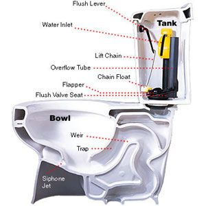 Anatomy of a low flush toilet shown in an annotated diagram.