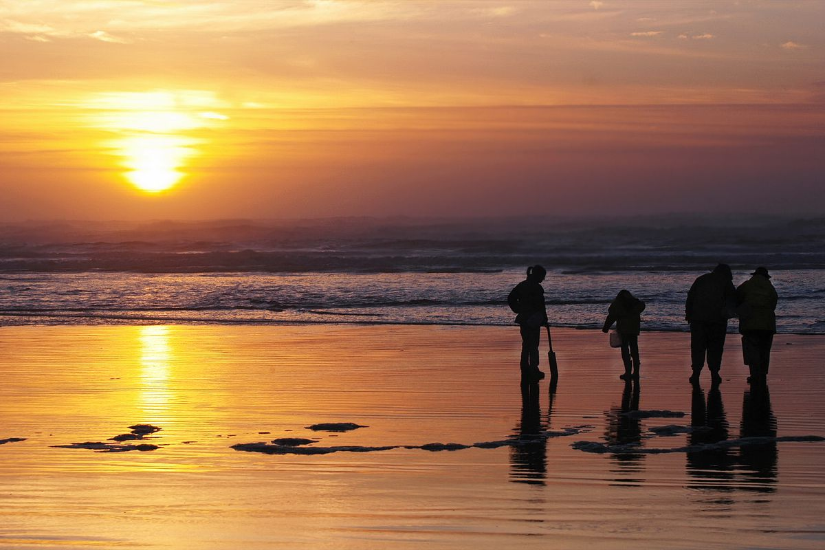 A group of four people are seen in the distance on a Washington beach, digging for razor clams at sunset.