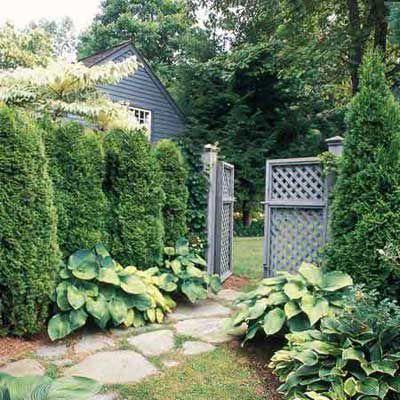 Evergreen Shrubs In Backyard For Privacy