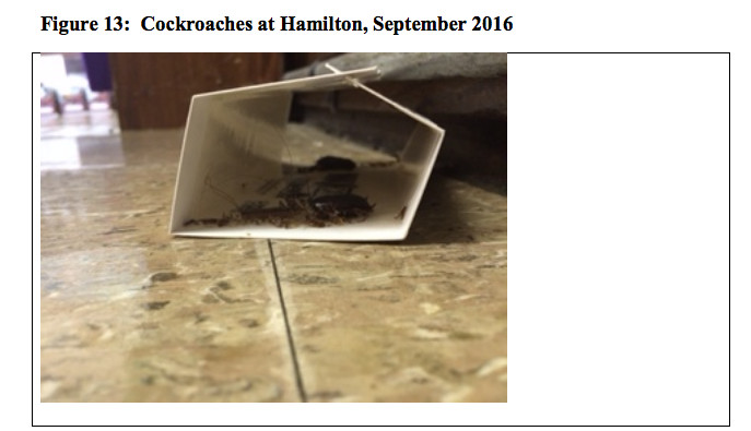 Teachers at Hamilton Academy say the school is infested with cockroaches.