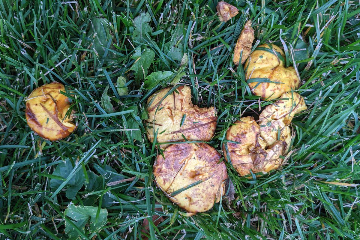 Chicken fat mushrooms.