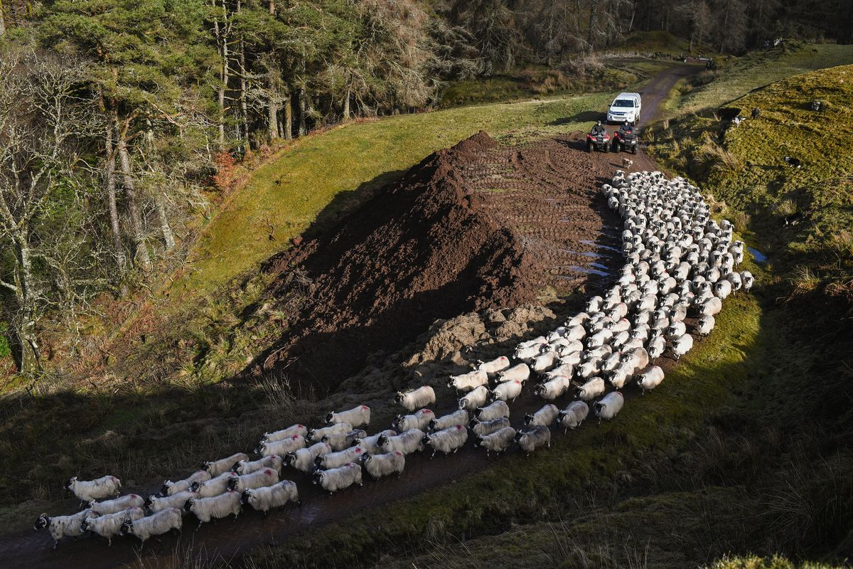 UK Hill Farmers Face Uncertain Future As Brexit Looms