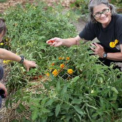 Genevieve Atwood, right, offers her tomatoes to Susan Finlayson of Wasatch Community Gardens at the dedication of the Popperton Plots community garden in Salt Lake City on Friday, Aug. 22, 2014.