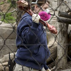 Kelsey Middleton, a cat keeper at Utah'sHogle Zoo, wears a mask and gloves as she carries an elk bone into an enclosure belonging to Nikolai, an Amur tiger, in Salt Lake City on Monday, April 6, 2020. Keepers at the zoo are wearing new protective gear after it was discovered a tiger at the Bronx Zoo in New York tested positive for COVID-19.