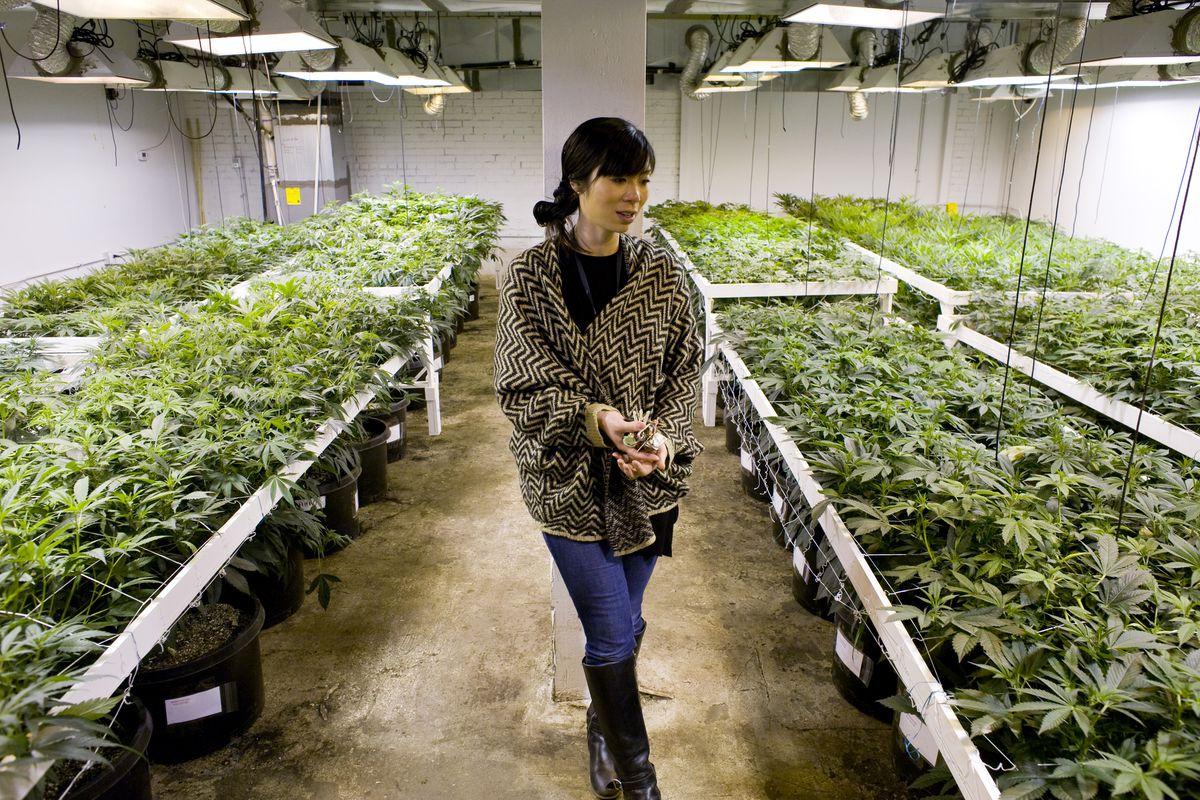 A medical marijuana operation in Colorado.