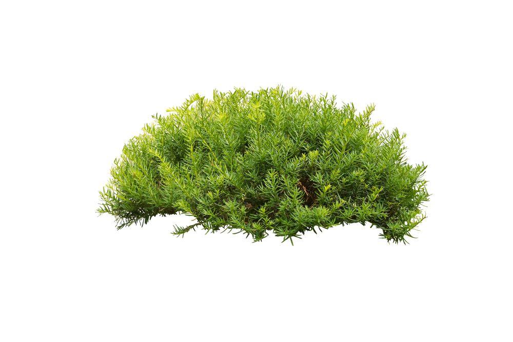 a bush.