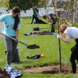 Volunteers take part in a Tree Utah community planting event at Sommerset Park in Lehi on Wednesday, Sept. 23, 2020.