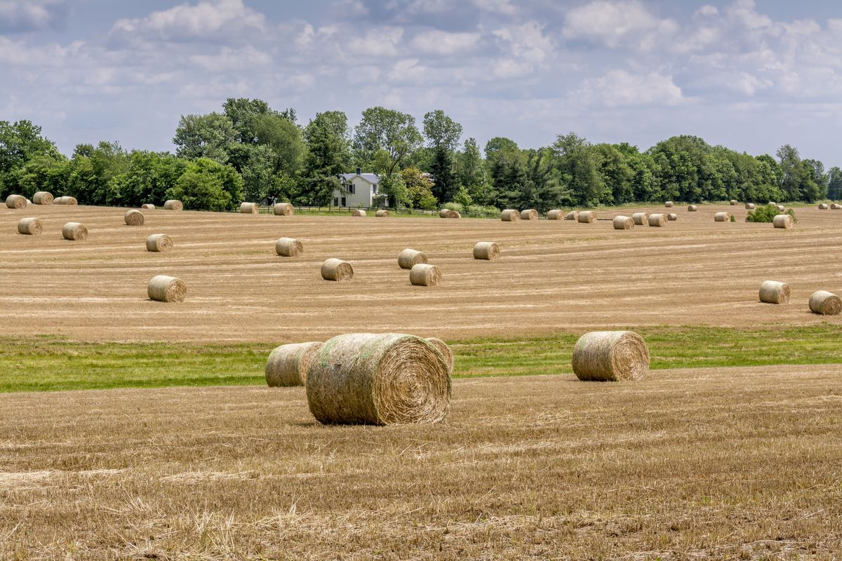 Rolled hay bales on a farm in the Bluegrass region of Kentucky