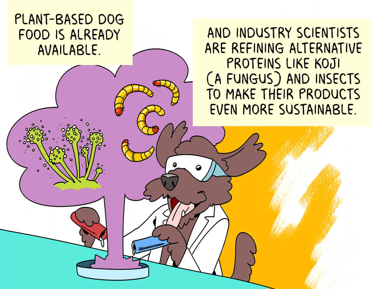 Plant-based dog food is already available. And industry scientists are refining alternative proteins like koji (a fungus) and insects to make their products even more sustainable.