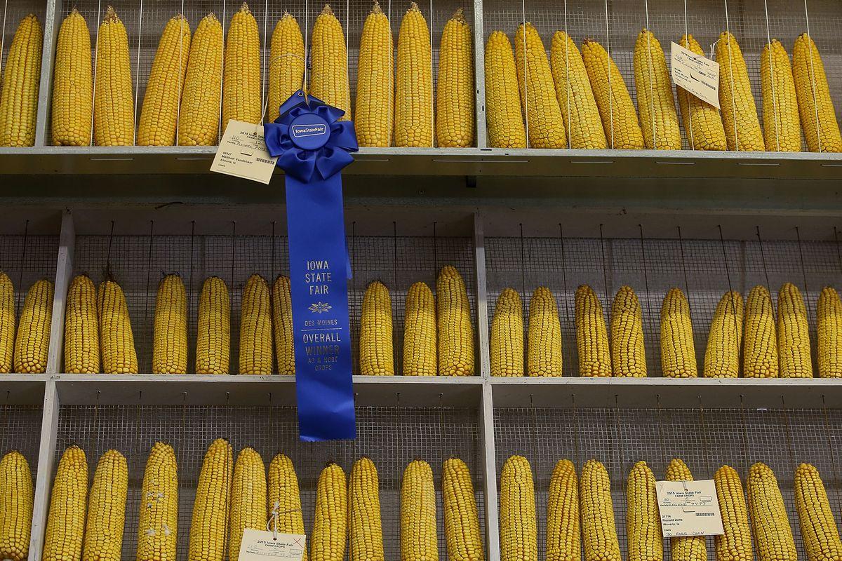 Iowa State Fair: Annual Midwestern Summer Rite