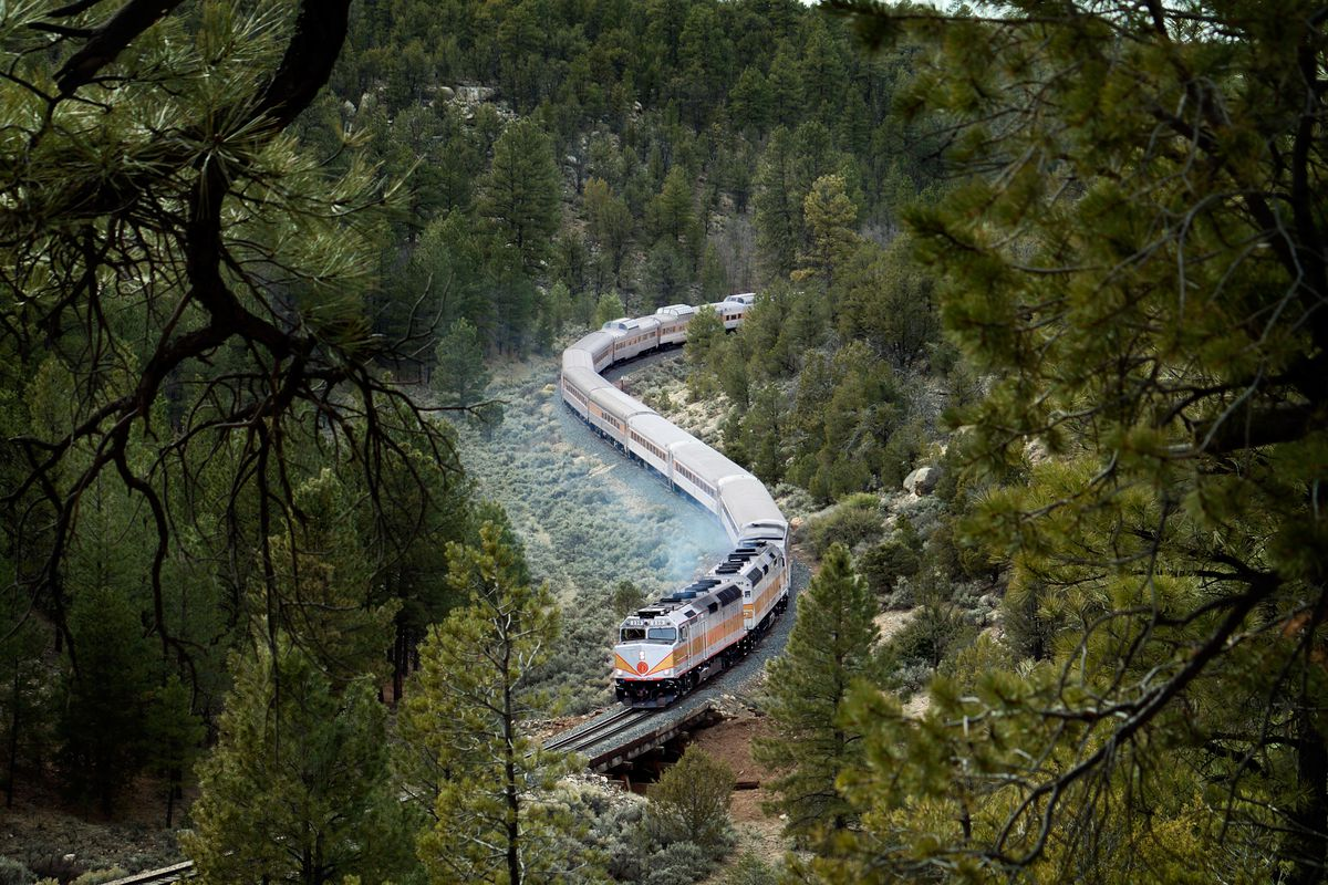 A train rides on a track through a lush forest. The train is white with an orange stripe.