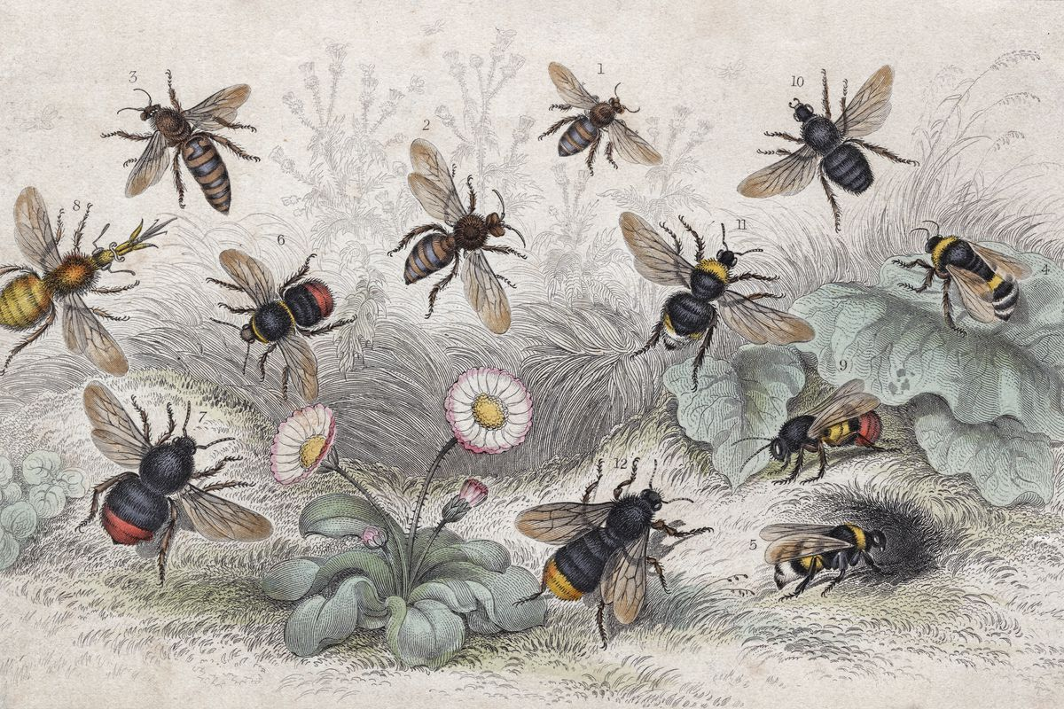 Bees In Colour
