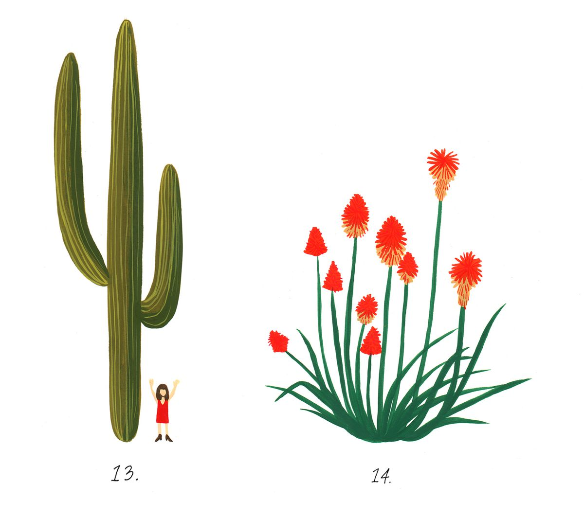 California desert plants: An illustrated guide - Curbed LA