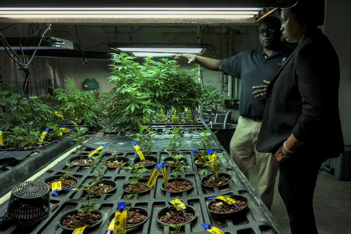 D.C. Mayor Muriel Bowser visits a medical marijuana grower. Marijuana plants are seen under marijuana lights.