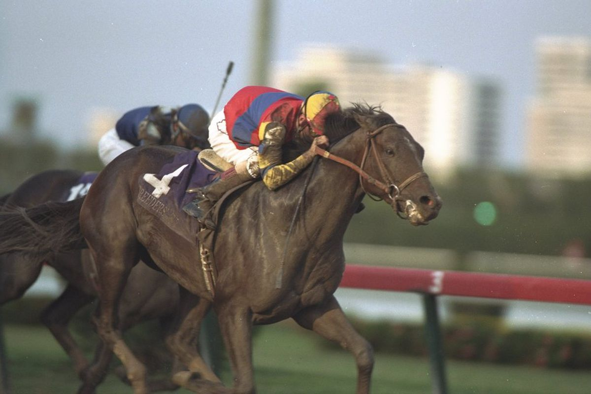 A. P. Indy, above winning the 1992 Breeders' Cup Classic at Gulfstream Park, won the 1991 Hollywood Futurity. (Photo: Chris Cole/Allsport/Getty Images Sport)