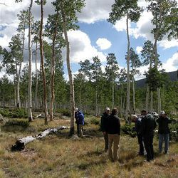 A recent U.S. Forest Service-sponsored field tour of the Pando aspen clone near Fish Lake in central Utah examined causes and remedies for widespread mortality within the clone.