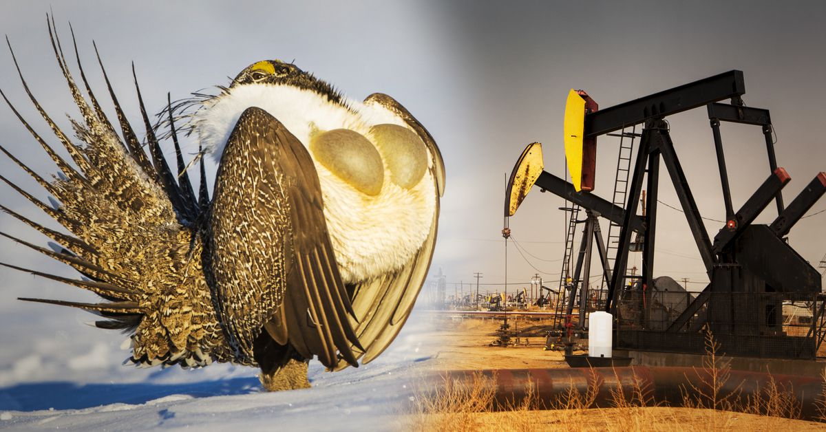 This goofy bird vs. the fossil fuel industry