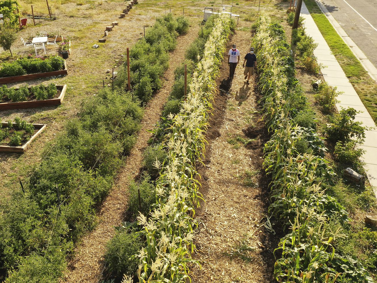 Why Latter-day Saints and a Jewish congregation joined forces in a major landscaping project
