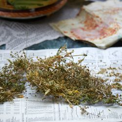 Fennel seeds drying on newspaper