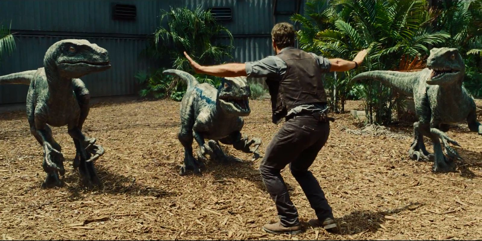 Owen Grady (Chris Pratt) confronts three dinosaurs in Jurassic World