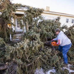 Lyle Bair cuts branches from pine trees that were felled by high winds at this home inWashington Terrace on Tuesday, Jan. 19, 2021. One of the trees landed on Bair's home, damaging his carport, his car and other items.