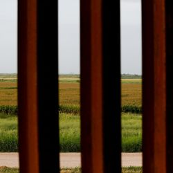 Thigh-high grasses in a field are seen beyond the border wall near McAllen, Texas, on Tuesday, June 22, 2021.