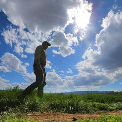 Longtime Panguitch resident Maloy Dodds walks Monday, June 8, 2015, in one of his fields.