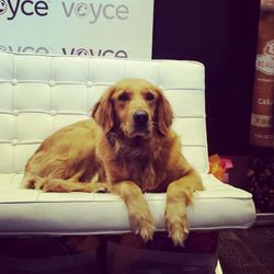 """Relax, PETA police, no lovable labs were harmed in the making of any gift bags. Pet tech brand <a href=""""http://www.mydogsvoyce.com/#!/voyce"""">Voyce</a> showed off their cool canine collars to loungegoers, because if us bipeds can enjoy the convenience of h"""
