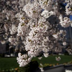 Trees blossom on Temple Square in Salt Lake City before the start of the 190th Annual General Conference of The Church of Jesus Christ of Latter-day Saints on Saturday, April 4, 2020. Due to the spread of COVID-19, the conference is being broadcast without church members in attendance.