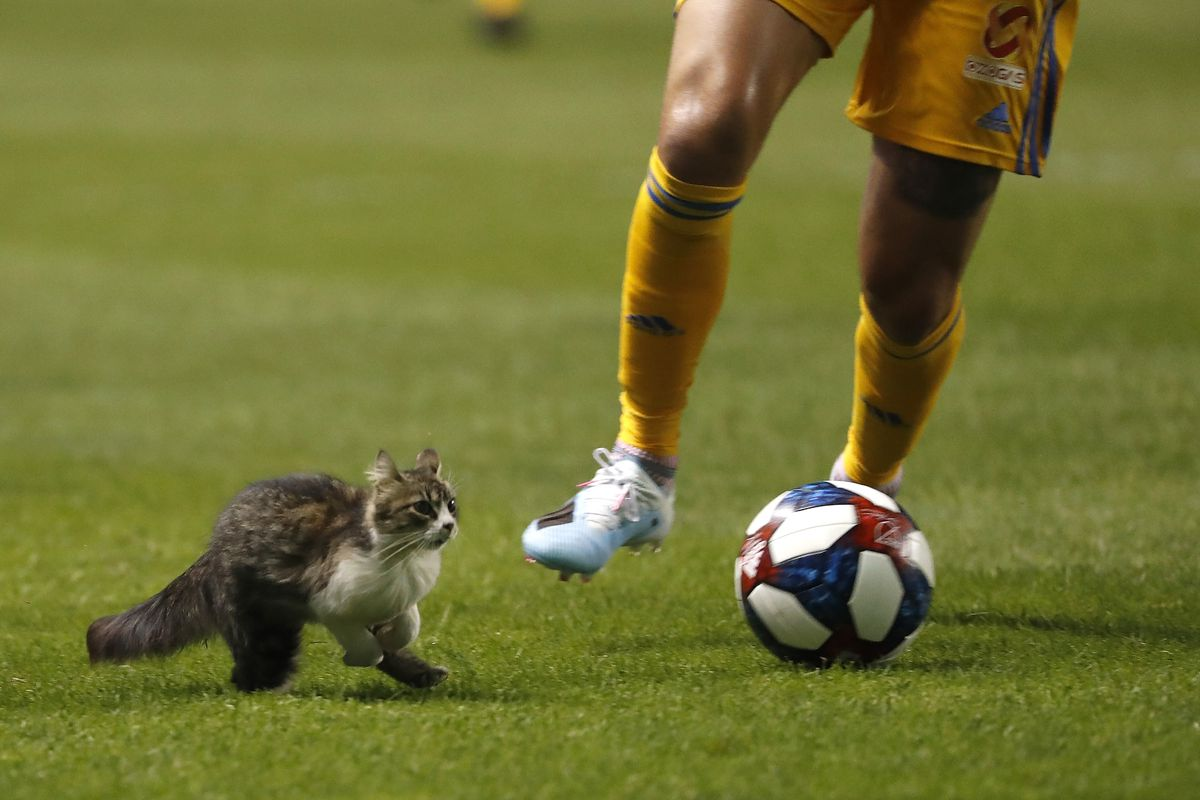 Major Link Soccer: RSL's pitch-invading cat immortalized in new lawsuit